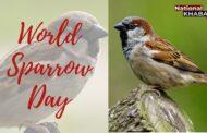 पर्यावरण का जीवंत बैरोमीटर है गौरैया, 20 मार्च को मनाया जाता है विश्व गौरैया दिवस