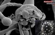 Black Fungus in Haryana: ब्लैक फंगस को लेकर चौंकाने वाला खुलासा, 64 मरीज ऐसे जिन्हें कभी नहीं हुआ कोरोना